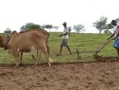 agricultor_arando_terra