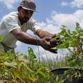 Agricultores com perdas devem fazer vistoria do Garantia-Safra