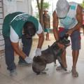 Alagoas ultrapassa meta da Campanha de Vacinação Antirrábica