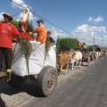 Olivença realiza mais uma tradicional Festa do Carro de Boi