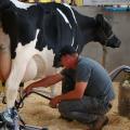 Pesquisa busca identificar melhor método de gerenciamento de produção de leite em Alagoas