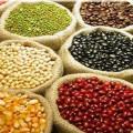 Governo vai distribuir mais de 800 toneladas de sementes em 2013