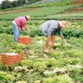 Avicultores participam de seminário sobre associativismo e manejo de galinha caipira