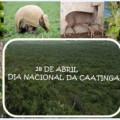 Hoje é o dia nacional da Caatinga