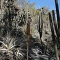 Caatinga pode ser mais eficiente do que florestas tropicais na absorção de gás carbônico
