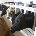 Projeto concede isenção de Pis/Pasep e Cofins para ração bovina