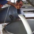 Produtores de leite de Alagoas apresentam reivindicações no Senado
