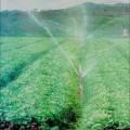 Governo organiza seminário para discutir agricultura irrigada