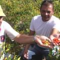 Fábrica de molho de pimenta apoiada pela Codevasf fortalecerá agricultura familiar em Alagoas