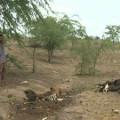 Município de Branquinha decreta emergência por causa da seca