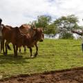 Agricultores alagoanos voltam a negociar débitos com BNB