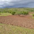 Com a chegada das chuvas, agricultor já presencia mudança no cenário do Sertão