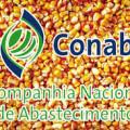 Santana do Ipanema vai receber 1000 toneladas de milho da Conab