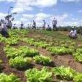 Agricultores beneficiados com kits de irrigação doados pela Codevasf trocam produção de cana por hortaliças