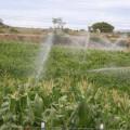 Canal do Sertão garante inclusão social e retorno de agricultores para moradores alagoanos