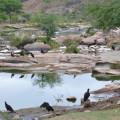 Santana: Possível fiscalização ambiental deixa trabalhadores de abatedouro em alerta no Sertão