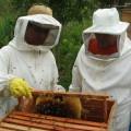 Água Branca recebe seminários sobre a criação de abelhas em Alagoas