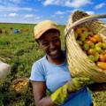 Agricultora poderá ter prioridade na venda de alimentos para merenda escolar