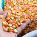 Agricultores de Delmiro serão beneficiados com sementes