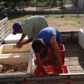 Secretaria de Agricultura adquiri uma tonelada de polpa de fruta para famílias carentes de Santana do Ipanema