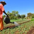 Agricultura pode ajudar Brasil a erradicar pobreza, diz representante da FAO