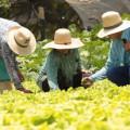 Canal do Sertão: Pequenas comunidades rurais serão beneficiadas por projetos de abastecimento