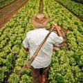 Prazo para produtores rurais aderirem a parcelamento de dívidas é adiado