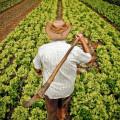 21 mil agricultores alagoanos devem receber seguro garantia-safra, diz Seagri