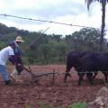 Santana do Ipanema: Chuva no Sertão anima os agricultores que aram as terras