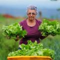Câmara pretende ampliar proteção a agricultor na reforma da Previdência