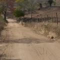 Motociclista de 40 anos morre em acidente na zona rural de Olivença