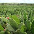 Pesquisadores montam banco de pesquisas sobre semiárido alagoano