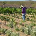 Agricultores de AL e mais dois estados recebem pagamento de garantia-safra