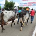 36ª Expo Bacia Leiteira terá feira da agricultura familiar em parceria com municípios