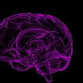 Neurologista do HU faz descoberta relacionada a redes neurais