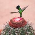 Flora alagoana é tema de exposição fotográfica organizada pelo IMA/AL