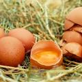 Produção de ovos bate recorde no país, diz IBGE