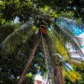 Corpo de Bombeiros resgata gato preso numa árvore em Santana do Ipanema