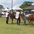 Abertura oficial da Expoalagoas Genética acontece nesta quarta (15)