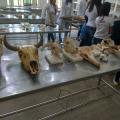 Ufal: Peças anatômicas de animais serão expostas na Semana do Meio Ambiente