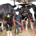 37ª Expobacia Leiteira vai reunir mais de mil animais durante evento no Sertão