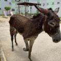 Comissão da OAB resgata animal que era esfaqueado pelo dono em Maceió