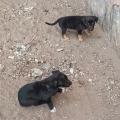 Bombeiros resgatam filhotes de cachorros no centro de Santana do Ipanema