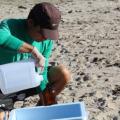 Amostras de trechos de praias de AL indicam águas livres de contaminação