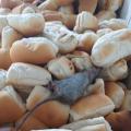 Sindapen divulga imagens de rato em pães que seriam servidos na prisão