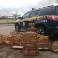 PRF prende motorista com pássaros silvestres na BR 101 em Alagoas