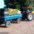Associação Xukuru-Kariri doa alimentos a instituições do semiárido alagoano