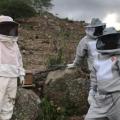 Emater distribui equipamentos e capacita apicultores em Santana do Ipanema