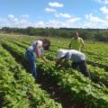 Emater articula compras institucionais para agricultura familiar