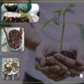 Alunos do Campus do Sertão da Ufal fazem compostagem para fertilizar solos
